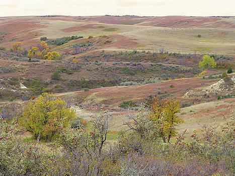 West Dakota Buffaloberry Reverie by Cris Fulton
