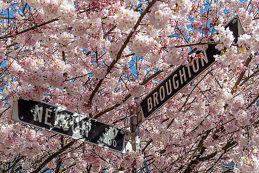 Ross G Strachan - West End Cherry Blossoms