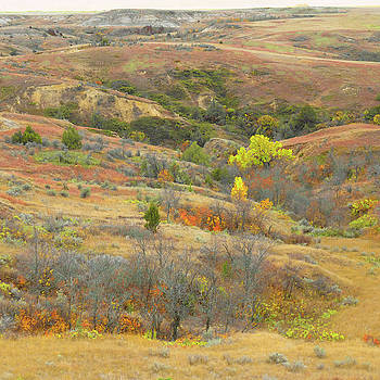 Western Edge Treasure Chest by Cris Fulton