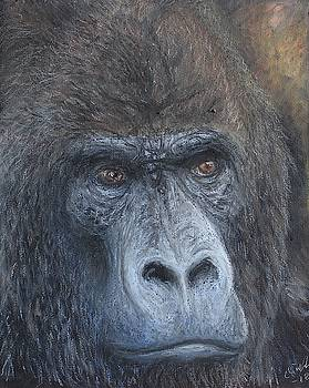 Western Gorilla  by Elin Johnsen