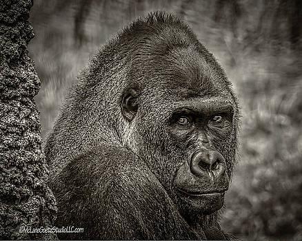 Western Lowland Gorilla BW  by LeeAnn McLaneGoetz McLaneGoetzStudioLLCcom