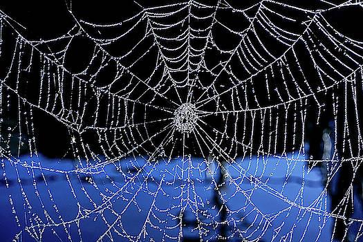 Wet Web by Dennis Dugan
