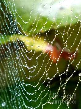 Wet Web With Sunrise by Beverly Elliott