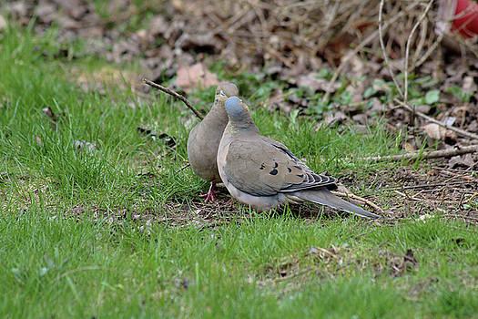 When Doves Kiss by David Stasiak
