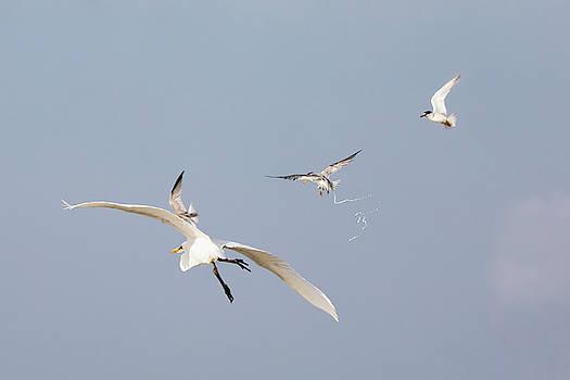 When Terns Attack by Susan Rissi Tregoning