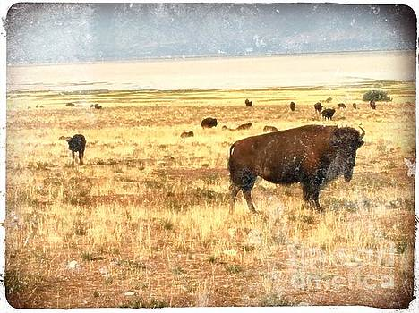 Where the Buffalo Roam by Kathy Strauss