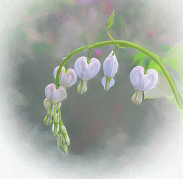 White Bleeding Heart  by Mary Lynn Giacomini
