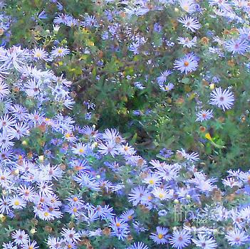 Felipe Adan Lerma - White Blue Cluster Square