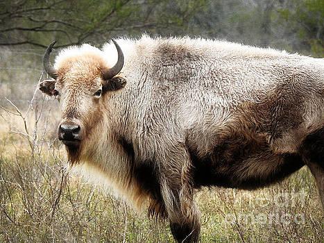 White Buffalo Bison by Ella Kaye Dickey