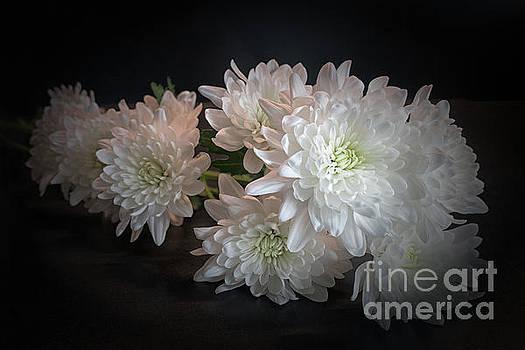 White Chrysanthemums by Lynn Bolt