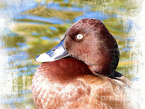 White Eyed Duck Profile by Trudee Hunter