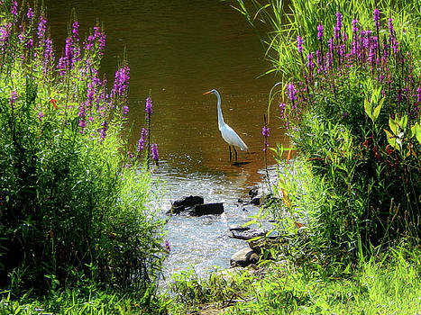 White Feathers Surrounded In Spring by Kathy Gail