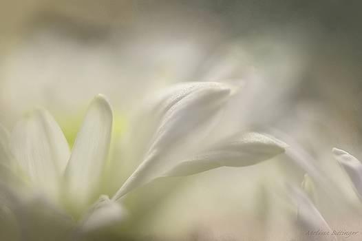 White Flower Petals Soft Focus by Melissa Bittinger