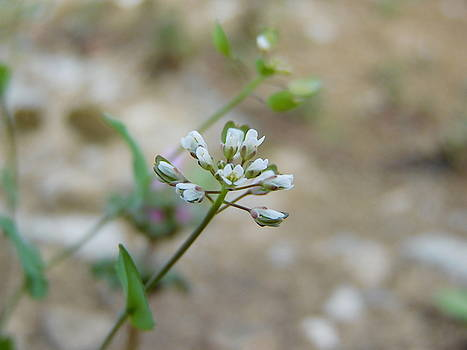 White Flowers on Stem by Abagail Wells