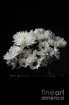 White Flowers over Black by Edward Fielding