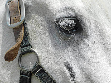 White Horse Beauty1 by Emmy Marie Vickers