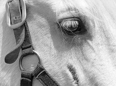 White Horse Beauty2 by Emmy Marie Vickers
