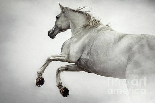 White Horse Rearing Up by Dimitar Hristov