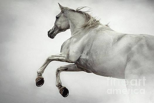 Dimitar Hristov - White Horse Rearing Up