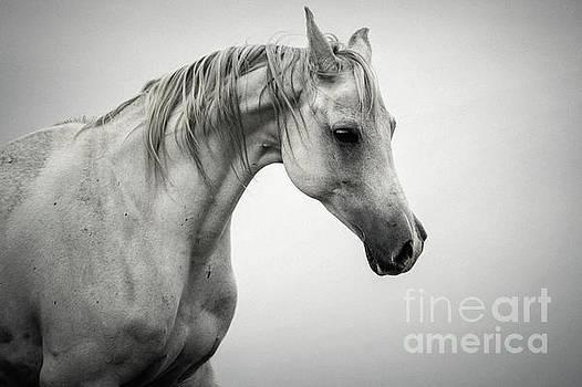 White Horse Winter Mist Portrait by Dimitar Hristov