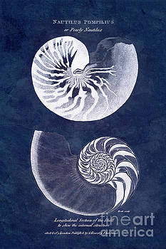 White nautilus on blue by Delphimages Photo Creations