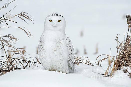 White on White by Nina Stavlund