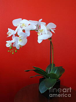 White Orchid by Heike Ward
