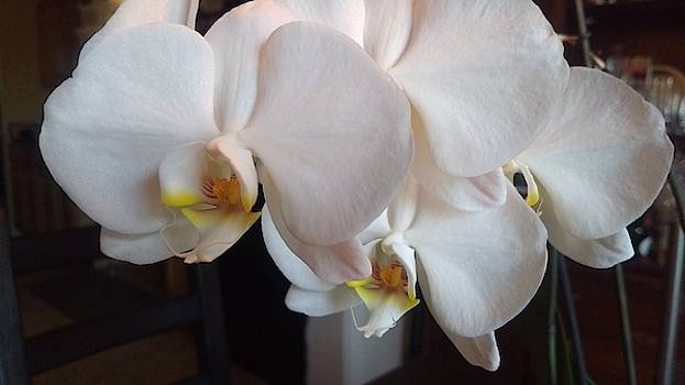 White Orchid by John Eric Goines