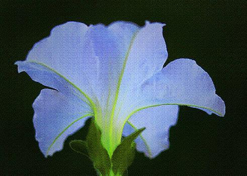 White Petunia by Sandra Day