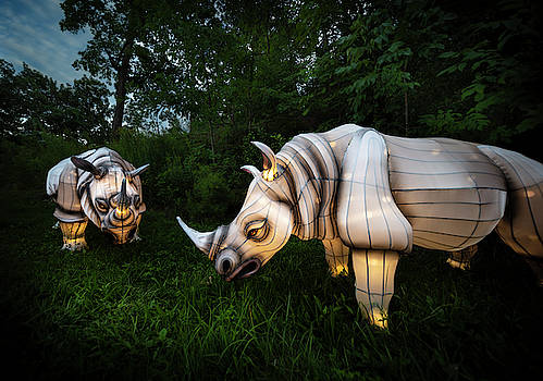 White Rhinos by Adam Kilbourne