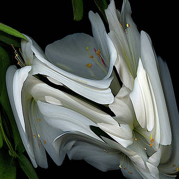 White Rhododendron by Carel Schmidlkofer
