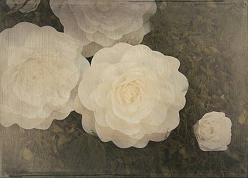 White Roses by Silvia Marcoschamer