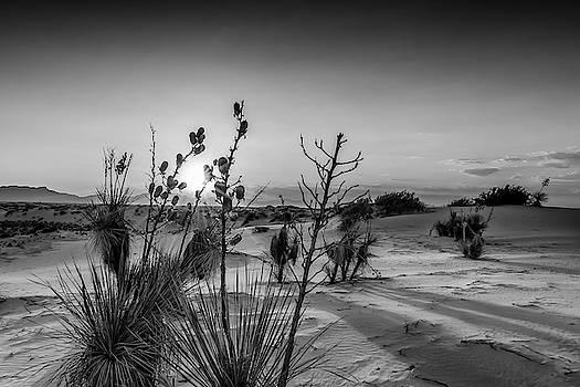 Melanie Viola - White Sands Sunset - Monochrome