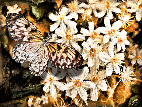 White Tree Nymph Butterfly by Andreas Theis