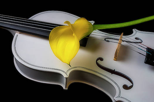 White Violin With Yellow Calla Lily by Garry Gay