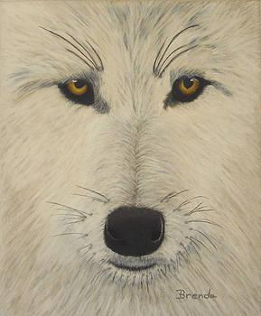 White Wolf by Brenda Maas