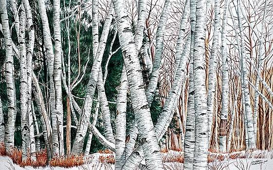 Christopher Shellhammer - Wild Birch Trees in the Deep Forest
