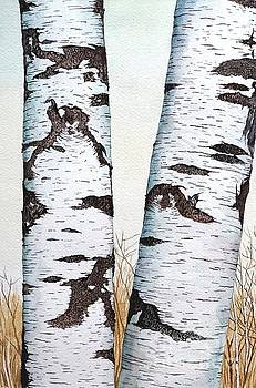 Wild Birch trees in the forest 1st Half in watercolor by Christopher Shellhammer