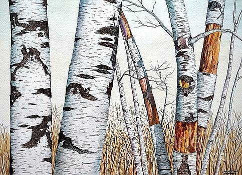 Christopher Shellhammer - Wild Birch Trees in the Forest