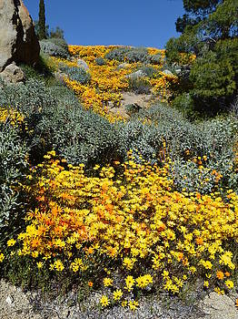 Wild Daisy Cascade by Glenn McCarthy Art and Photography