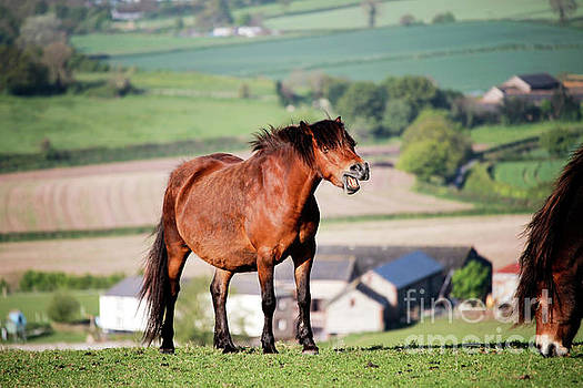 Wild Devon Horse by Leon Woods