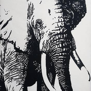 Wild Elephant by Anwar Sadat