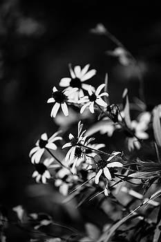 Wild Flower II by Hyuntae Kim