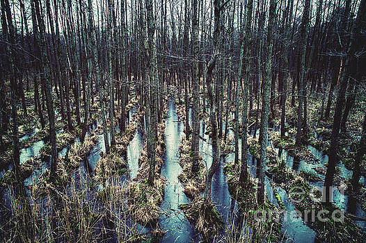 Wild forest on the water. by Michal Bednarek