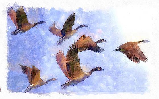 Wild Geese II by Robert Bissett