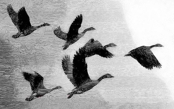 Wild Geese by Robert Bissett
