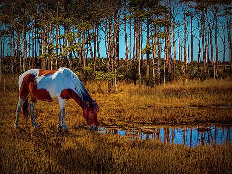 Wild Horse by Paul Wear