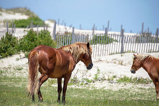 Wild Horses 11 by David Stasiak