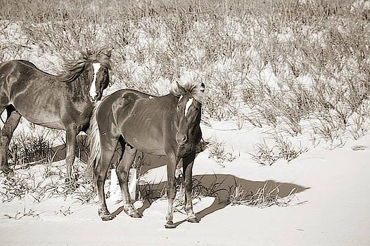 Wild Horses 110 by David Stasiak