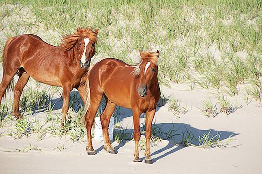 Wild Horses 111 by David Stasiak